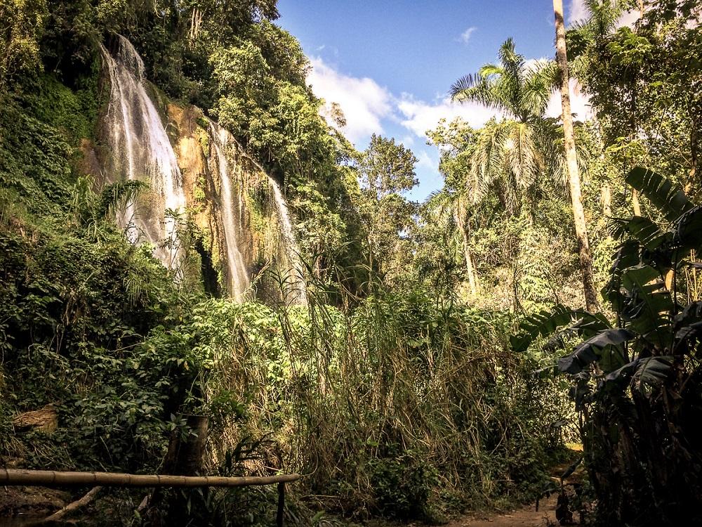 Dschungel Kuba